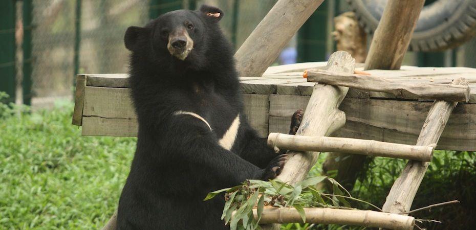 Photo of bear